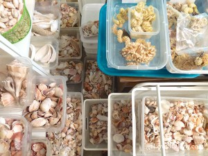 organizing sea shells and beach bling