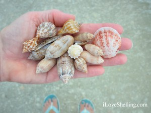 sea shelling Sanibel Island Florida