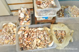 unorganized shells in containers