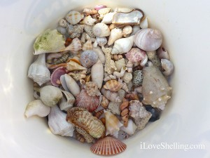 white bucket of seashells