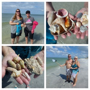Cayo Costa shell collecting