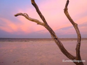 Purple sky behind drift wood branch
