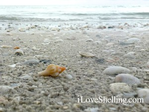 Sanibel beach with shells