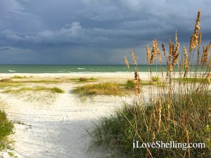 Sea oats frame a Sanibel beach