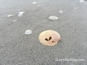 butterfly heart on a seashell