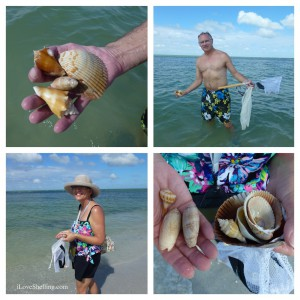 collecting shells on cayo costa 4