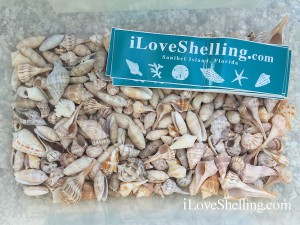 iLoveShelling giveaway shells and stickers