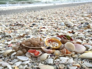 mini shells surrounded by seashell shards