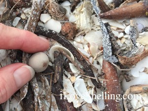 sea bean beach combing
