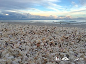 seashells on a beach at dusk