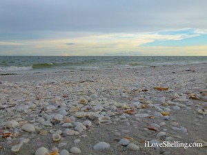 seashells on the beach at dusk