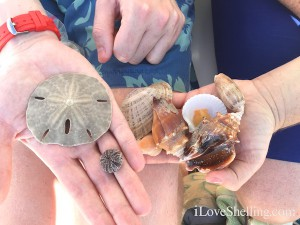 Finding Seashells on group tour