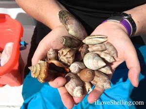 sara's shells
