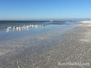 Low tide Sanibel beach