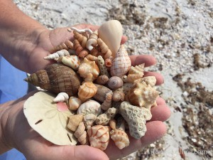 Sea shell collection from day at Big Hickory with Pam Rambo