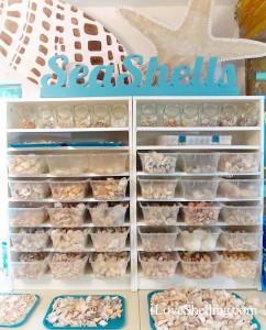 SeaShells sort of sorted in containers