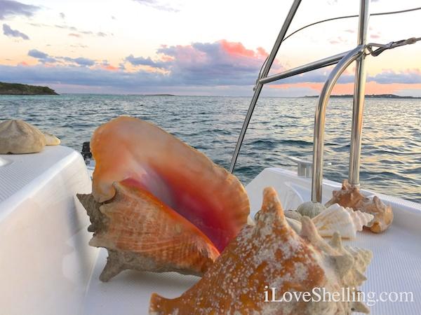 Seashells on a sailboat in the Bahamas