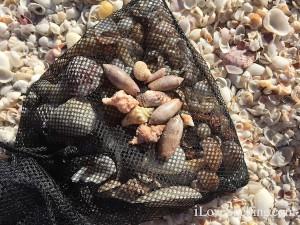 Shannon's shells