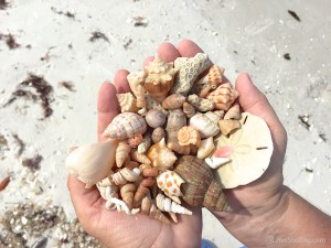 Shells picked up on Little Hickory beach with Pam Rambo
