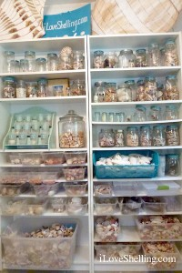 Shelves for organizing shells in jars and bins
