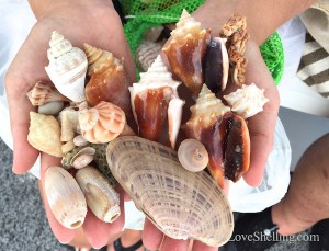 beautiful shells found with Pam Rambo