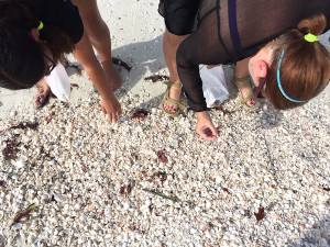 collecting shells at Big Hickory Island Florida