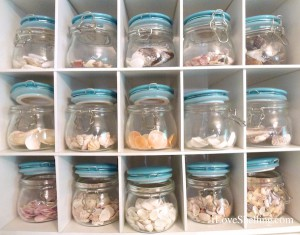 containers for organizing sea shells