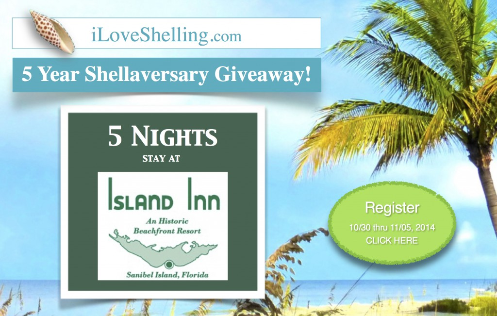 iLoveShelling 5 shellaversary iis