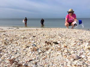 seashell collecting with i Love Shelling