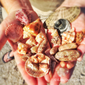 Sea shell treasures