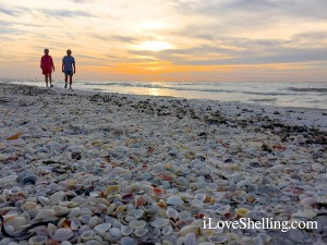 Sanibel shells and beach combers at sunrise