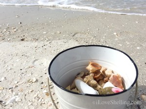 white bucket shells on the beach