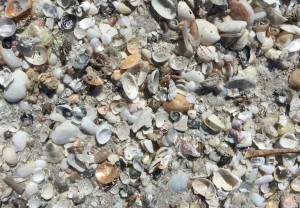 Find seashells with cybershelling photo