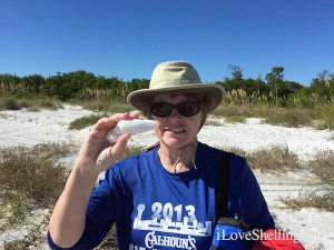 Finding Angel wing shells with iLoveShelling