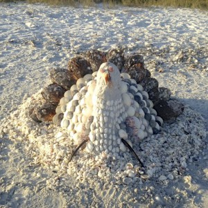shell turkey beach art