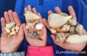 seashell collection on shelling trip