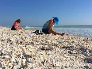 combing the beach for shells