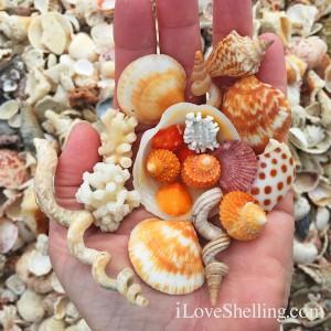 happy shells