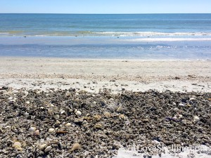 high tide wrack line on Sanibel gulfside city park
