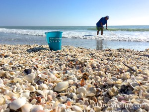 i Love Shelling seashell bucket