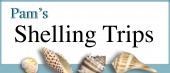 Seashell Shelling Trips