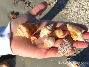 pretty shells found by Aleece