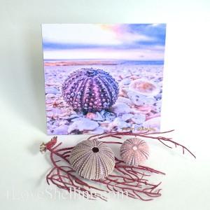 sea urchin vignette