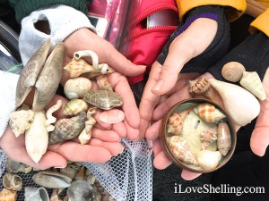 shells found November 2014 with i Love Shelling
