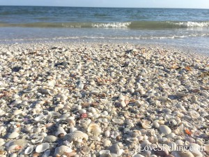 Beach of shells on Sanibel