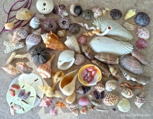 Comfort Make a wish seashells