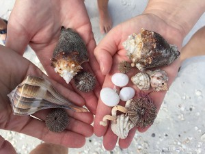 Finding seashells and sea urchins