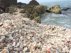 Where to find mounds of shells