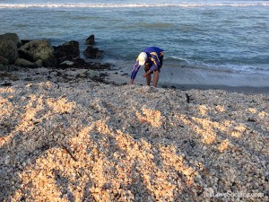 Where to find shells