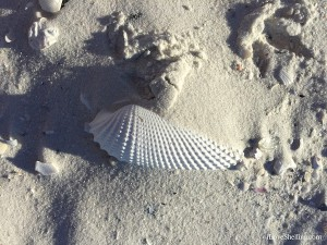 angel wing in the sand